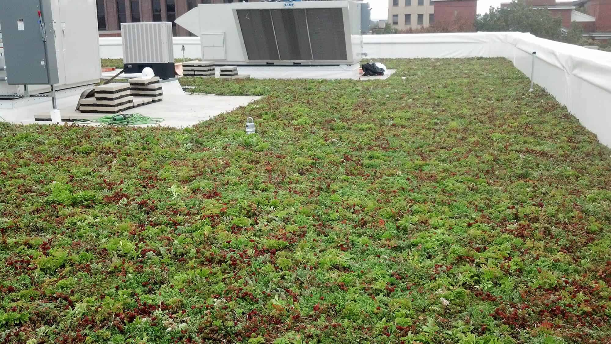 Green roof vegetation on city hall